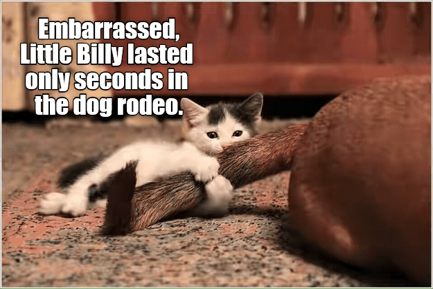 lasted cat dogs only embarrassed rodeo seconds caption