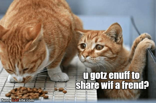 share friend caption Cats enough got