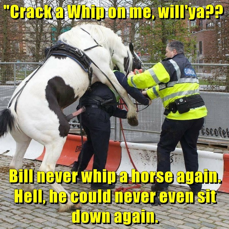 """Crack a Whip on me, will'ya??  Bill never whip a horse again. Hell, he could never even sit down again."