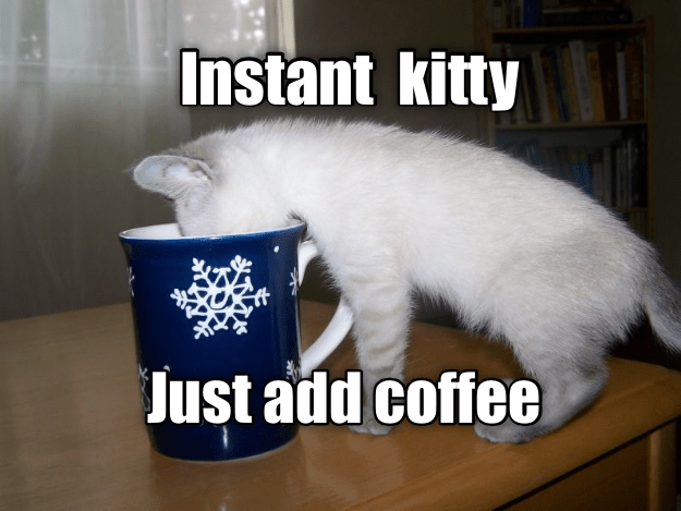 add just coffee instant kitty caption - 8977064704