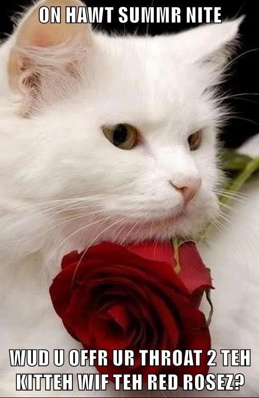 ON HAWT SUMMR NITE  WUD U OFFR UR THROAT 2 TEH KITTEH WIF TEH RED ROSEZ?