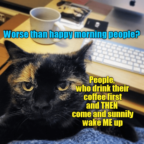 drink cat people wake sunnily up me worse morning coffee caption - 8977153536