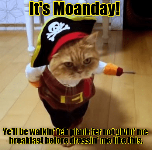 like cat plank walking dressing caption this moanday - 8977154048