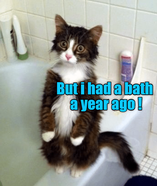 cat year had bath ago caption - 8977181696