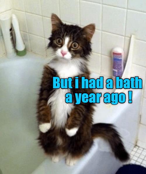 cat year had bath ago caption - 8977181696