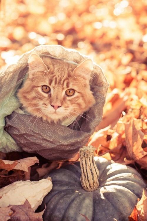 cat wearing a scarf - Cat - Oayant conbe