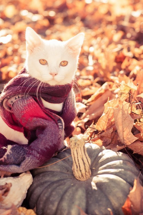 autumn,photography,cozy,photoshoot,scarves,leaves,Cats,fall