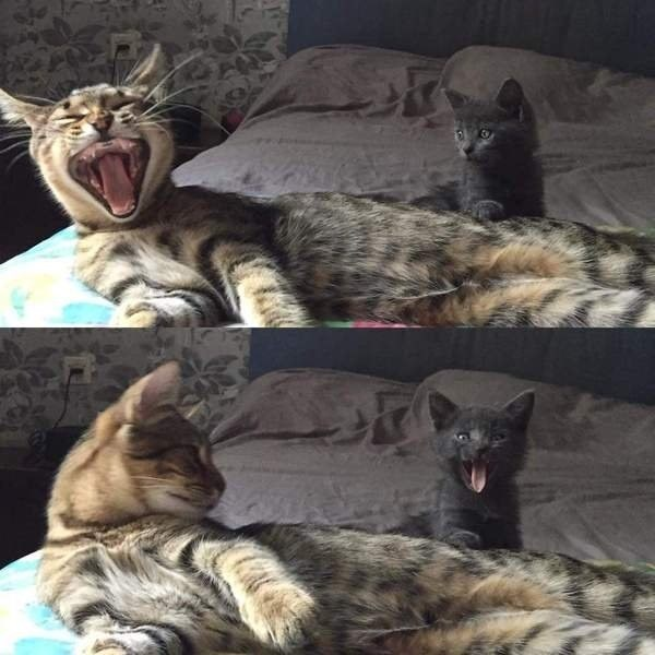 yawning is contagious