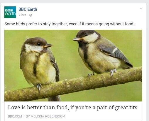 funny facebook puns BBC headline