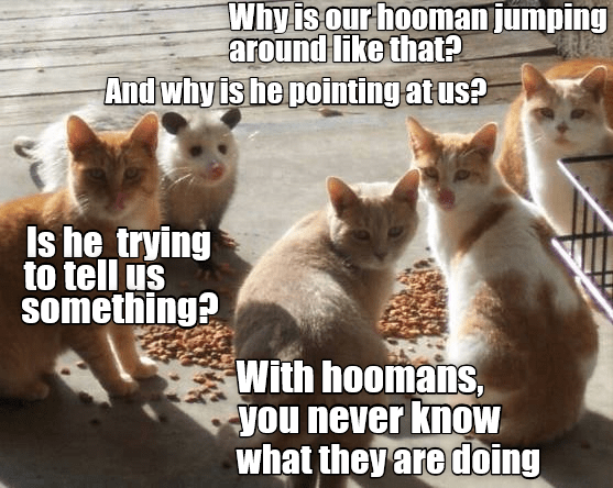 something us human caption Cats pointing tell jumping - 8977428224