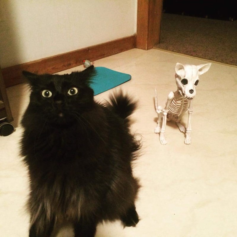 Funny picture of a cat implying that the thing is behind him and we see a funny cat-skeleton behind him.