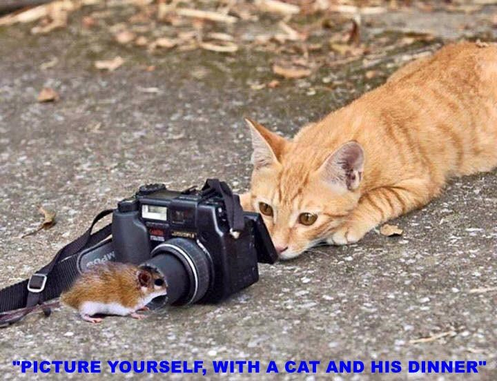 """""""PICTURE YOURSELF, WITH A CAT AND HIS DINNER"""""""