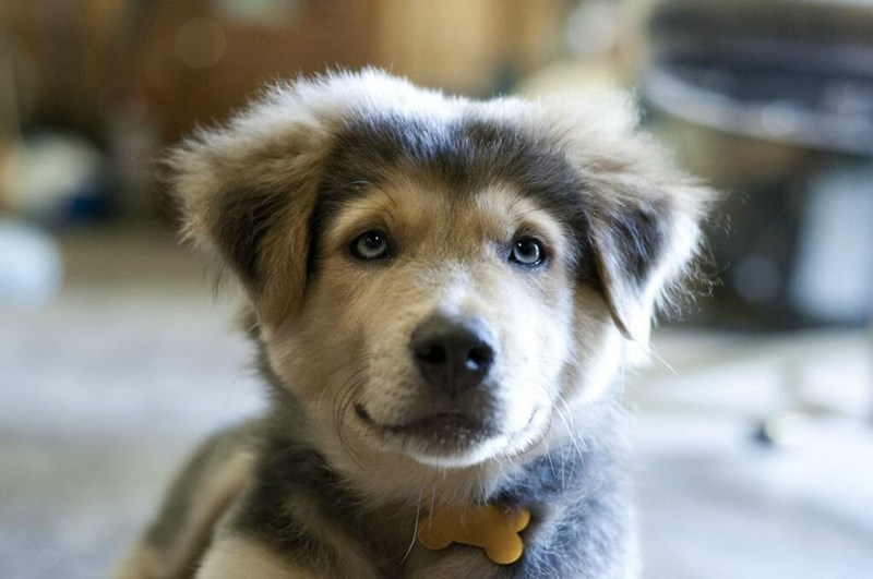 dogs puppy - 8977565696