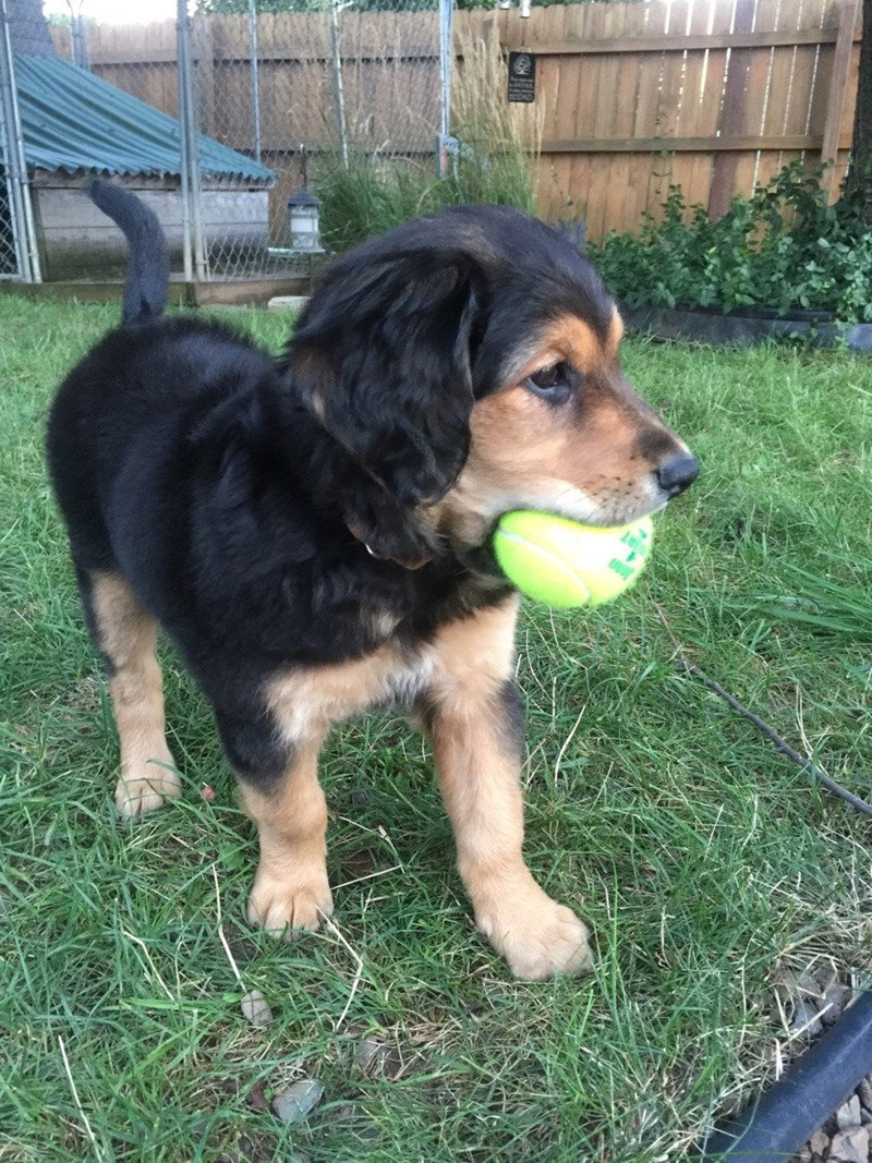dogs ball - 8977568768