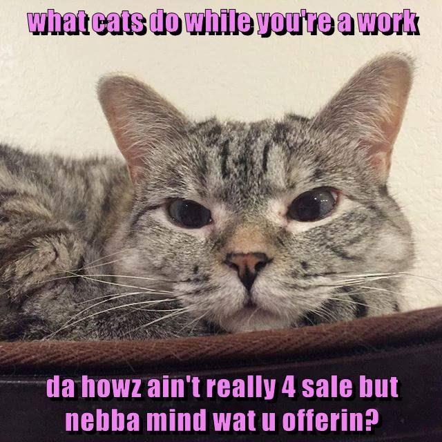 cat house work sale offering caption - 8977573376