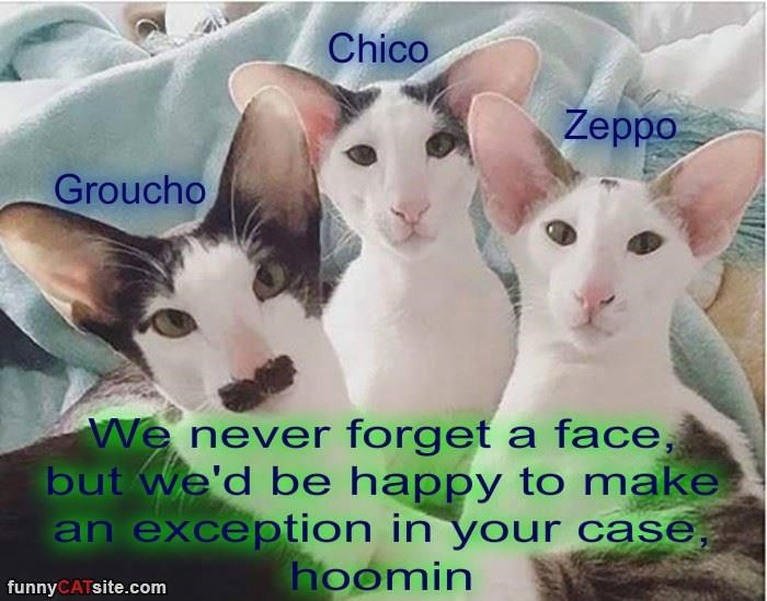 The Marx Brothers of the Feline World