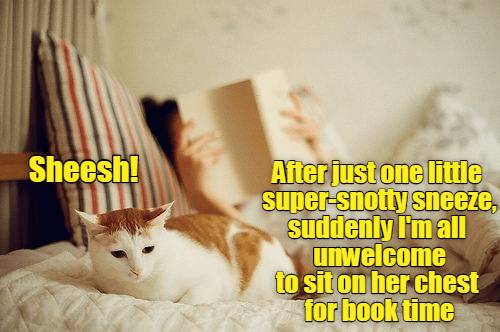 cat chest one just unwelcome caption Super sneeze snotty - 8977619200