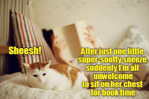 cat one just caption Super sneeze - 8977619200