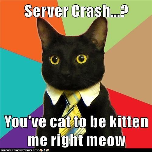 funny cat memes - 8977704448