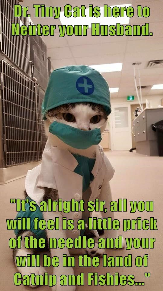 "Dr. Tiny Cat is here to Neuter your Husband.   ""It's alright sir, all you will feel is a little prick of the needle and your will be in the land of Catnip and Fishies..."""