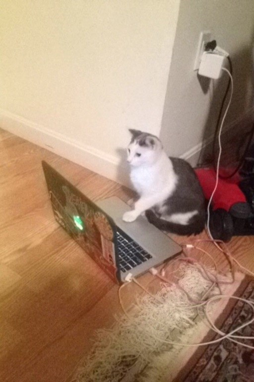on the internet nobody knows youre a cat