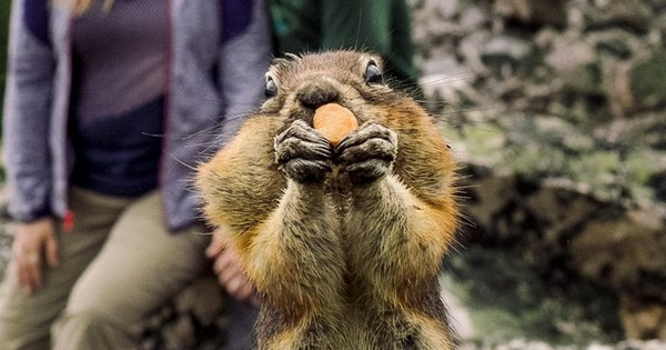 photobomb squirrel photoshoot engagement dating - 897797