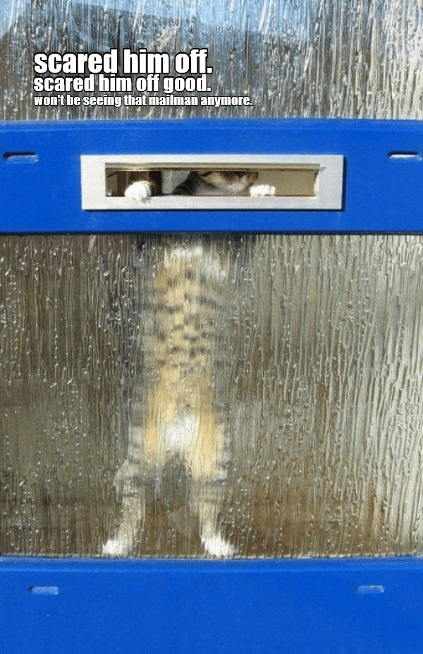 cat off mailman scared caption