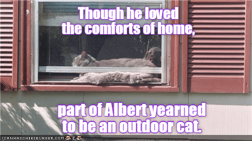 cat loved comfort outside caption home yearned