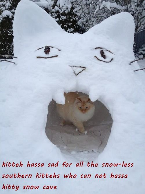 kitteh hassa sad for all the snow-less southern kittehs who can not hassa kitty snow cave