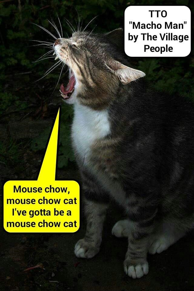 """Mouser Cat"" (TTO ""Macho Man"" by The Village People) (recaption: http://tinyurl.com/gvk7cvm"