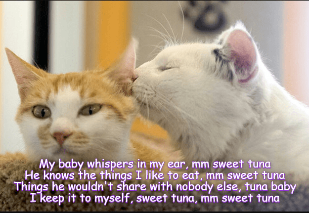 Sweet nothings / Sweet tuna
