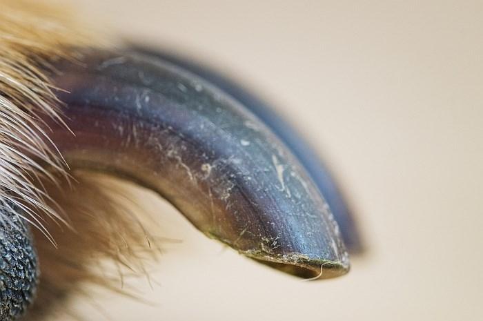 up close dog pics - Close-up