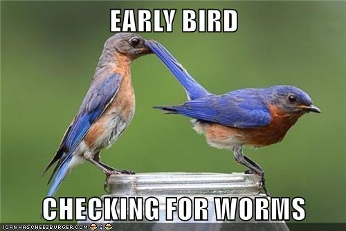 EARLY BIRD  CHECKING FOR WORMS