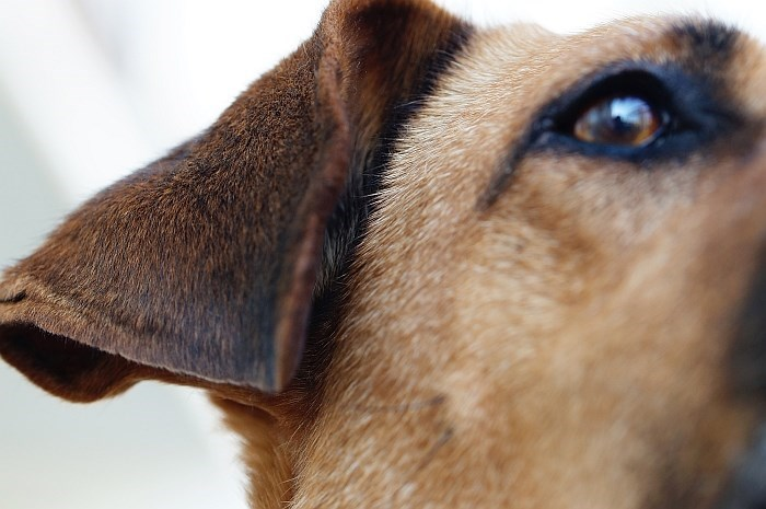 up close dog pics - Canidae