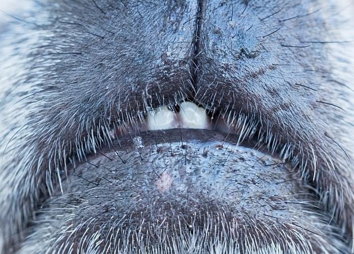 up close dog pics - Nose