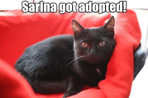Sarina Got Adopted!