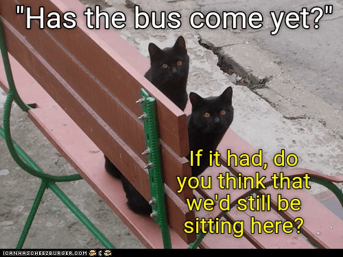 bus Cats caption here come has sitting still