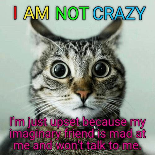 cat crazy caption imaginary friend talk not upset wont - 8978518528