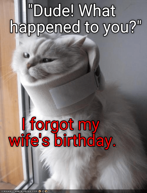 grey cat wearing brace on neck looking annoyed happy birthday meme