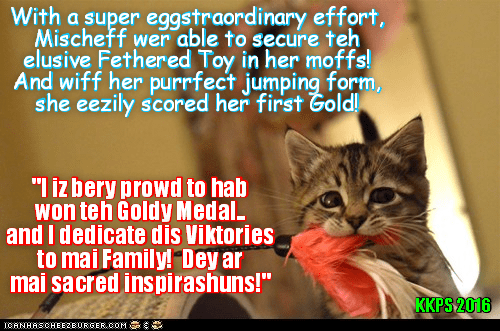 RIO LOLYMPICS NEWS FLASH: Surprise new competitor Mischief wins her first LoLympic Gold Medal wiff first place in the highly competitive Feathered Toy Jump and Grab Event (Ittie Bittie Division)!
