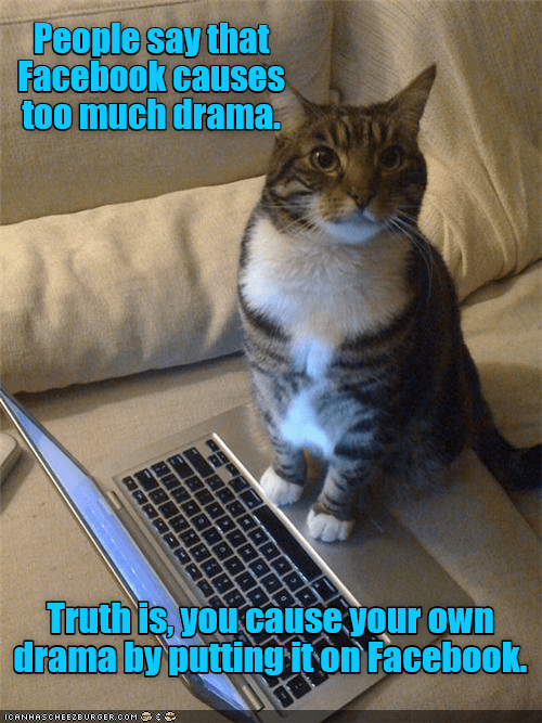 cat caption facebook drama truth own putting