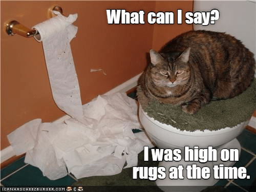 caption Caturday high rugs what say