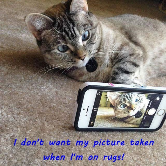 I don't want my picture taken when I'm on rugs!