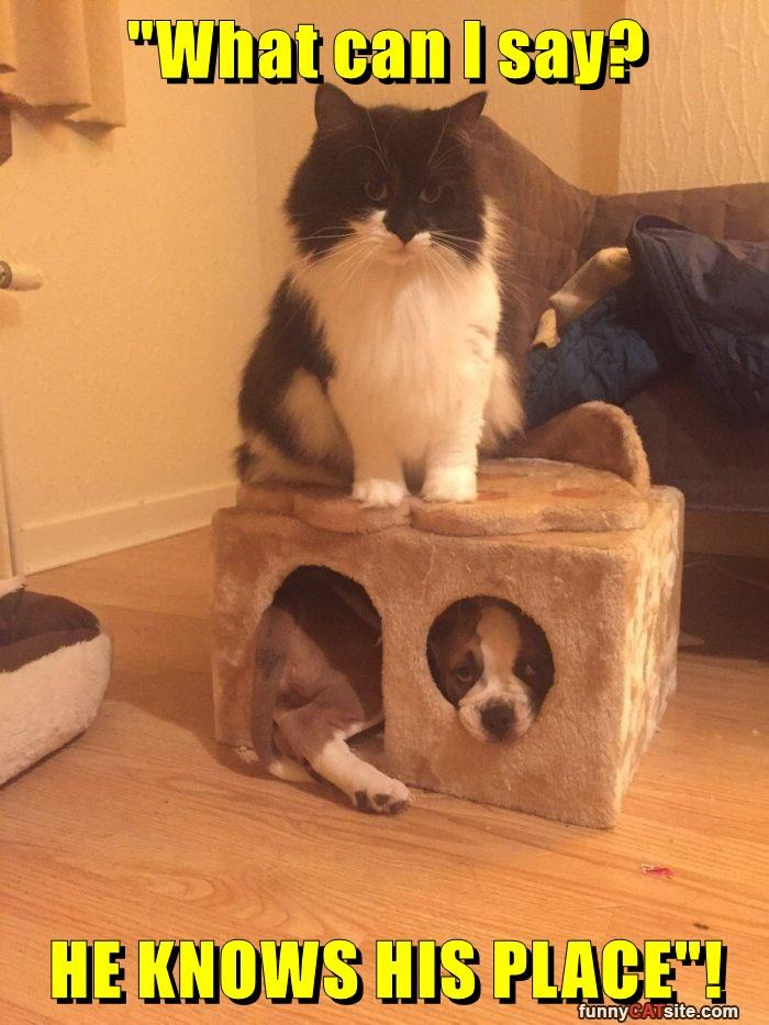 cat caption knows puppy place what say - 8978855168