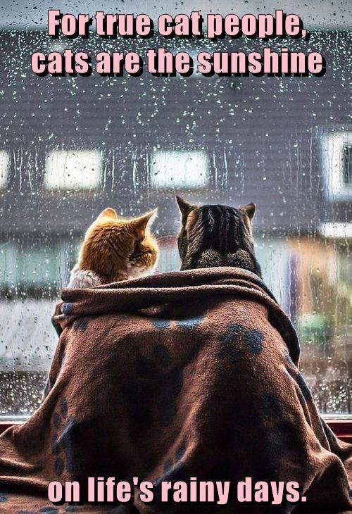 For true cat people, cats are the sunshine on life's rainy days.