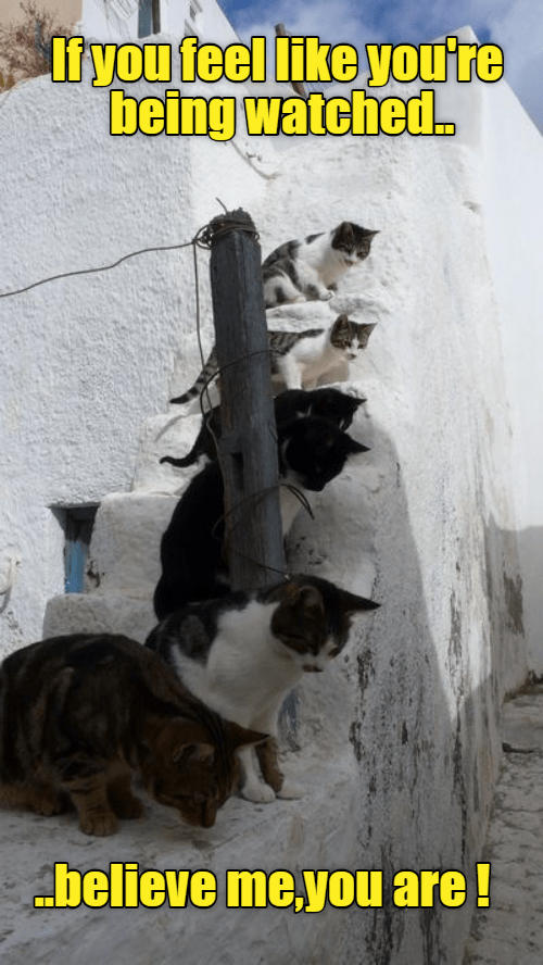 are,Cats,caption,feel,watched,you
