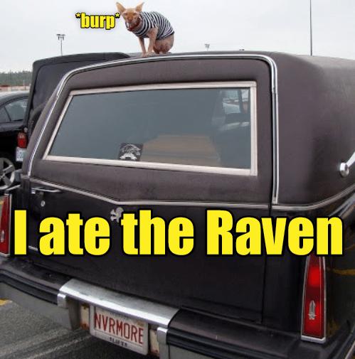 burping cat caption ate raven - 8978974464