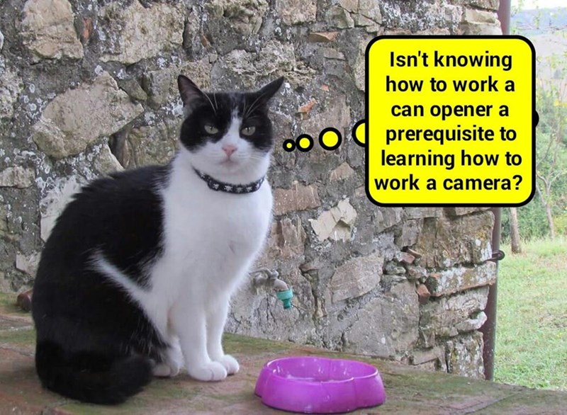 You should have learned it in Catslavitude 101   (recaption: http://tinyurl.com/h4cutey