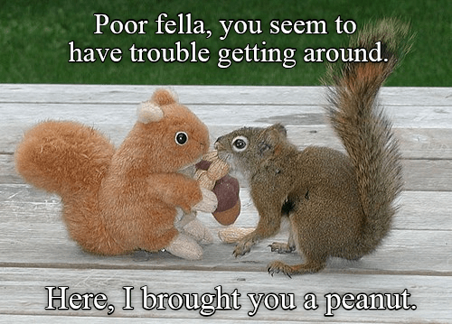 Kindhearted squirrel always has a little something for the less fortunate.