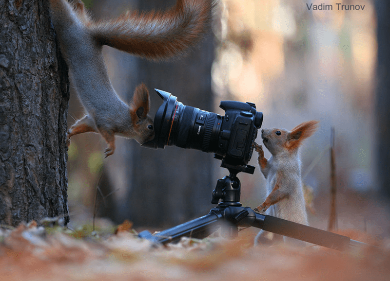 squirrels - Tree - Vadim Trunov